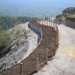 Parco-archeologico-cosilinum08